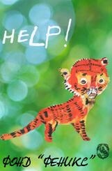 Как помочь Амурскому тигру и Дальневосточному леопарду