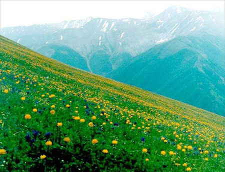 заповедник алтайский цветы