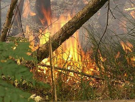 Раскраска Пожар В Лесу